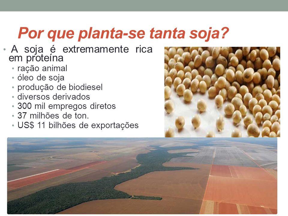 Por que planta-se tanta soja? A soja é extremamente rica em proteína ração animal óleo de soja produção de biodiesel diversos derivados 300 mil empreg