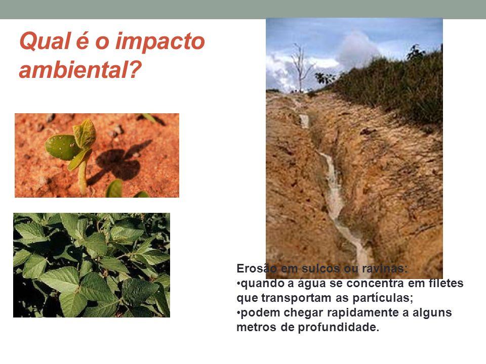 Qual é o impacto ambiental? Erosão em sulcos ou ravinas: quando a água se concentra em filetes que transportam as partículas; podem chegar rapidamente