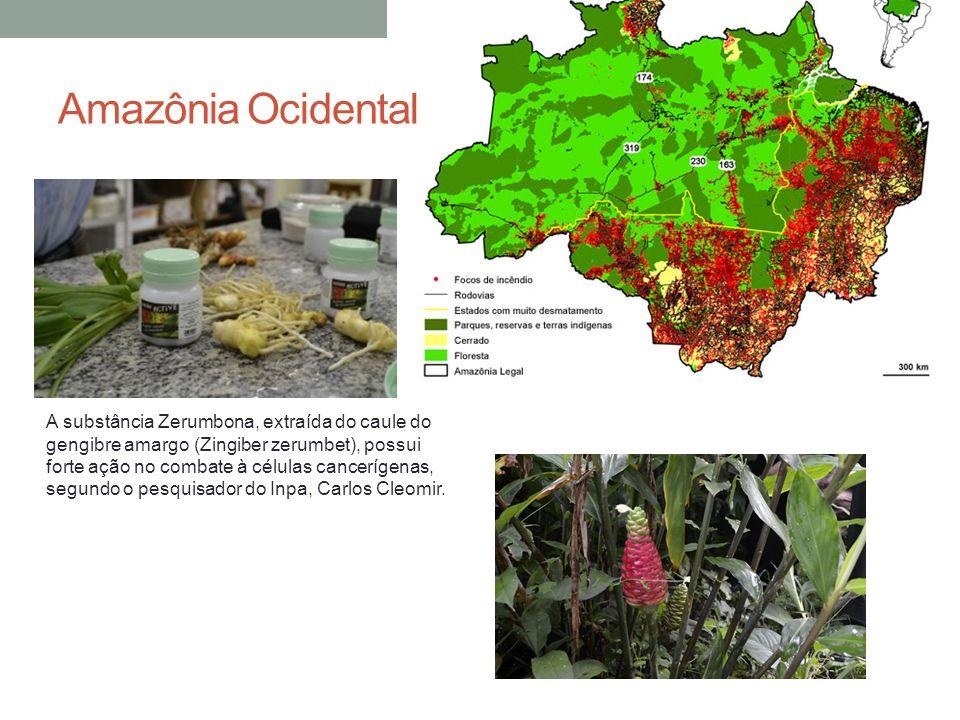 Amazônia Ocidental A substância Zerumbona, extraída do caule do gengibre amargo (Zingiber zerumbet), possui forte ação no combate à células cancerígen