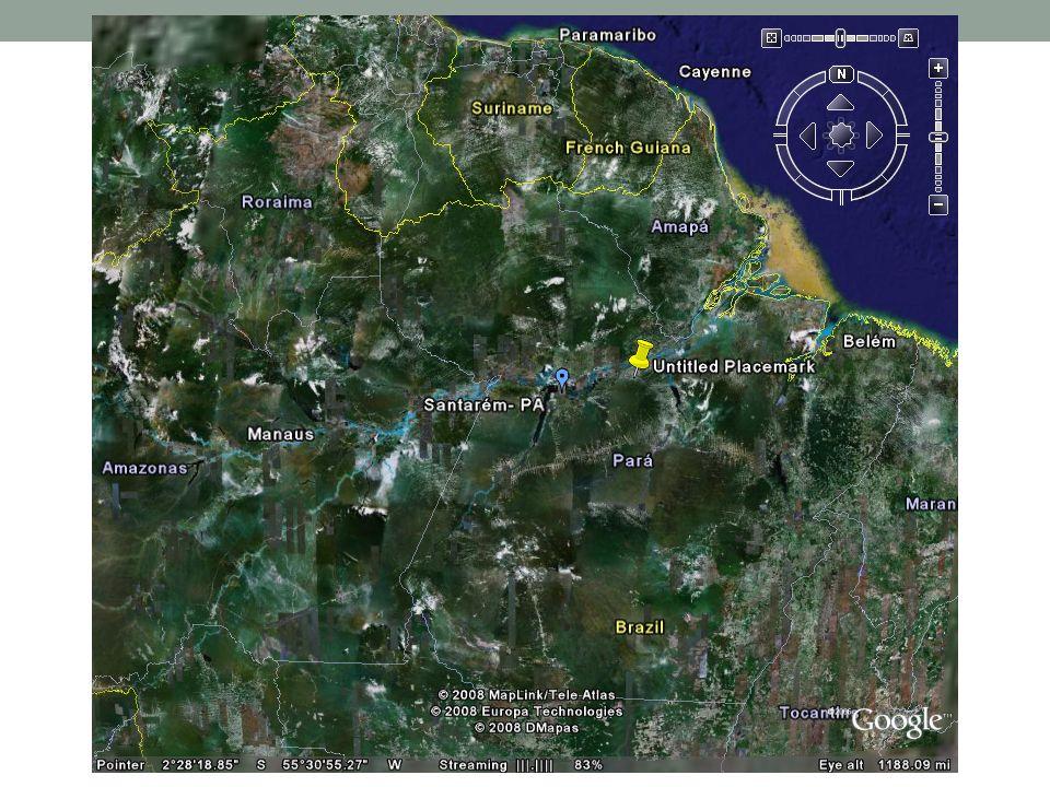 Solo da Amazônia Solo Arenoso e pobre em nutrientes; Camada de folhas com rápida decomposição bacteriana; E se retirar a cobertura vegetal.