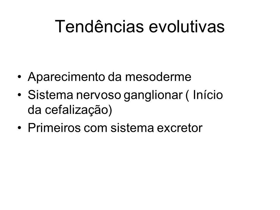 Tendências evolutivas Aparecimento da mesoderme Sistema nervoso ganglionar ( Início da cefalização) Primeiros com sistema excretor