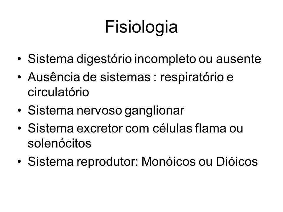 Fisiologia Sistema digestório incompleto ou ausente Ausência de sistemas : respiratório e circulatório Sistema nervoso ganglionar Sistema excretor com