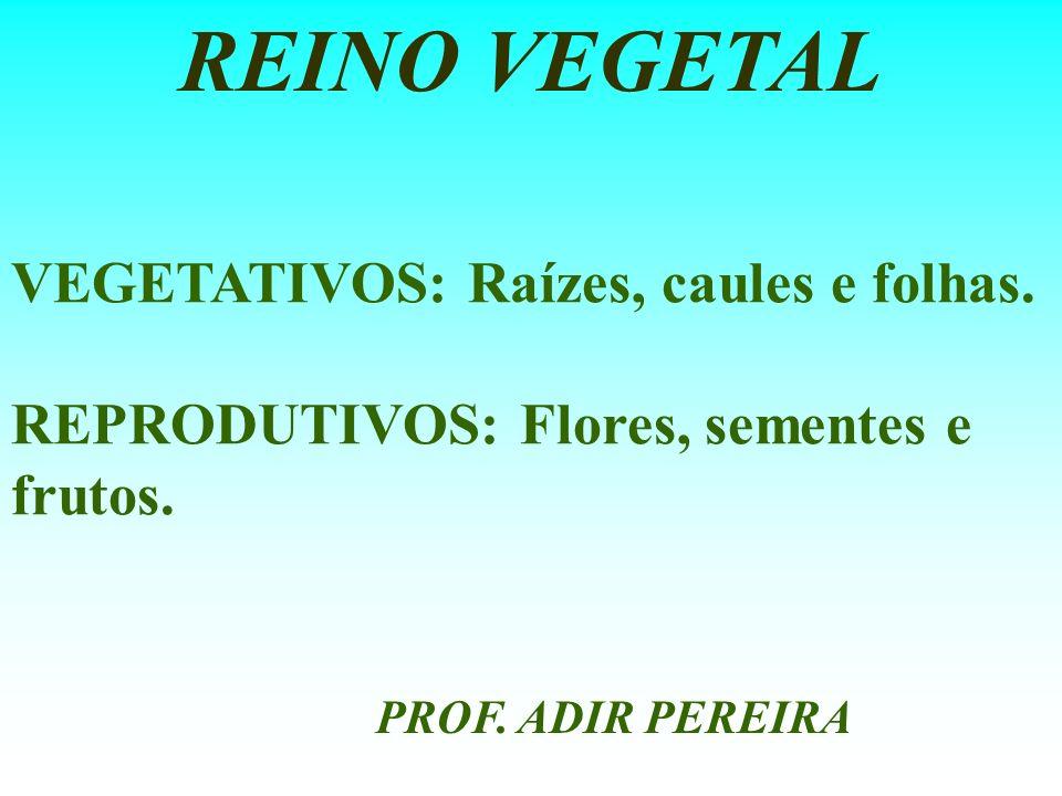 VEGETATIVOS: Raízes, caules e folhas. REPRODUTIVOS: Flores, sementes e frutos. REINO VEGETAL PROF. ADIR PEREIRA