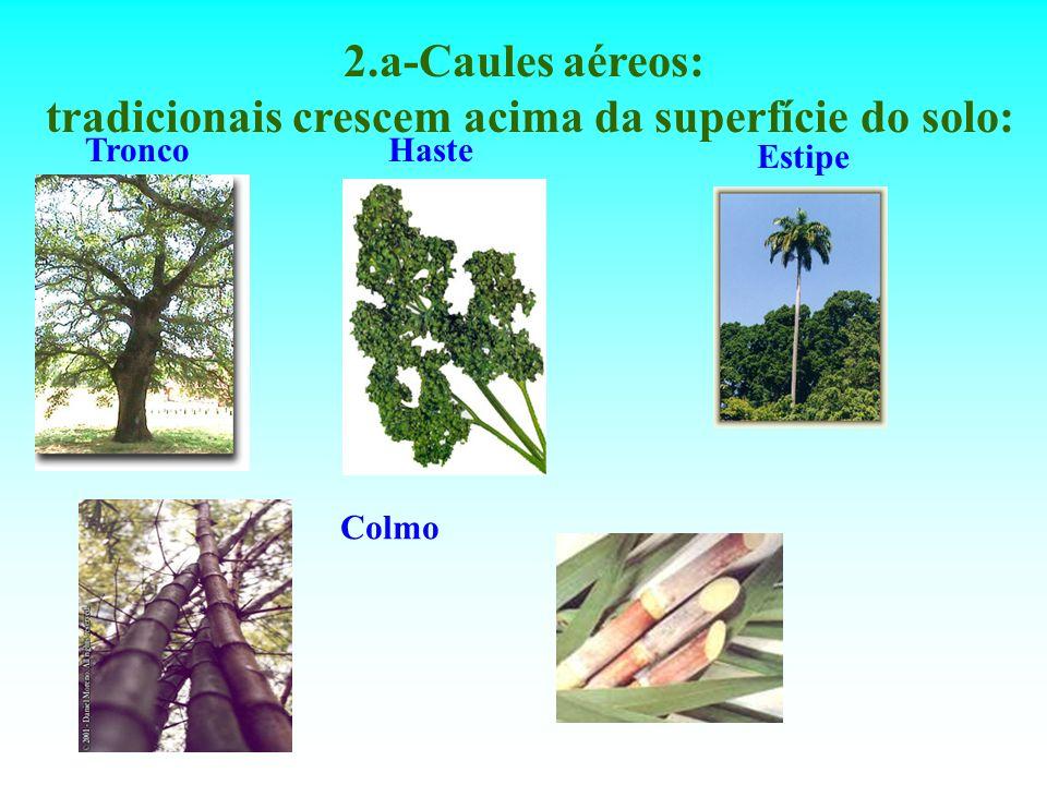 2.a-Caules aéreos: tradicionais crescem acima da superfície do solo: TroncoHaste Estipe Colmo