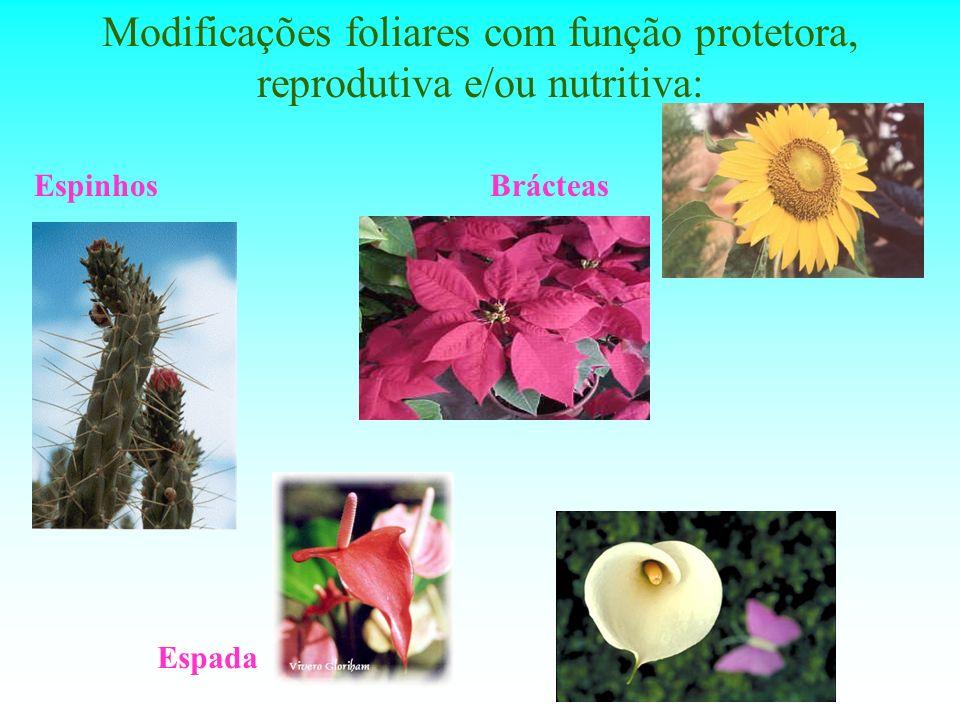 Modificações foliares com função protetora, reprodutiva e/ou nutritiva: EspinhosBrácteas Espada