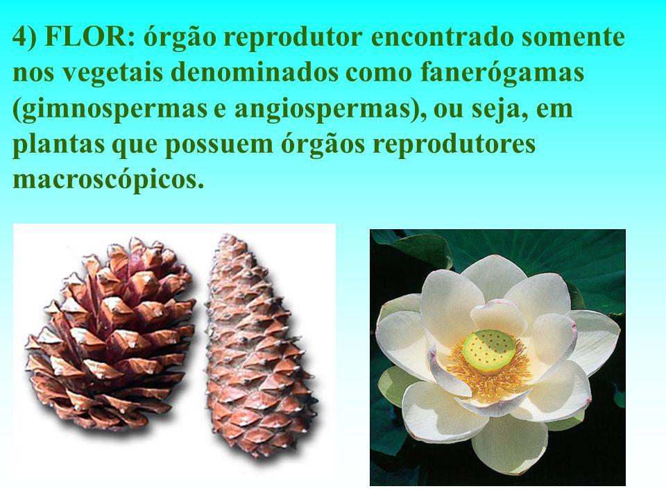 4) FLOR: órgão reprodutor encontrado somente nos vegetais denominados como fanerógamas (gimnospermas e angiospermas), ou seja, em plantas que possuem