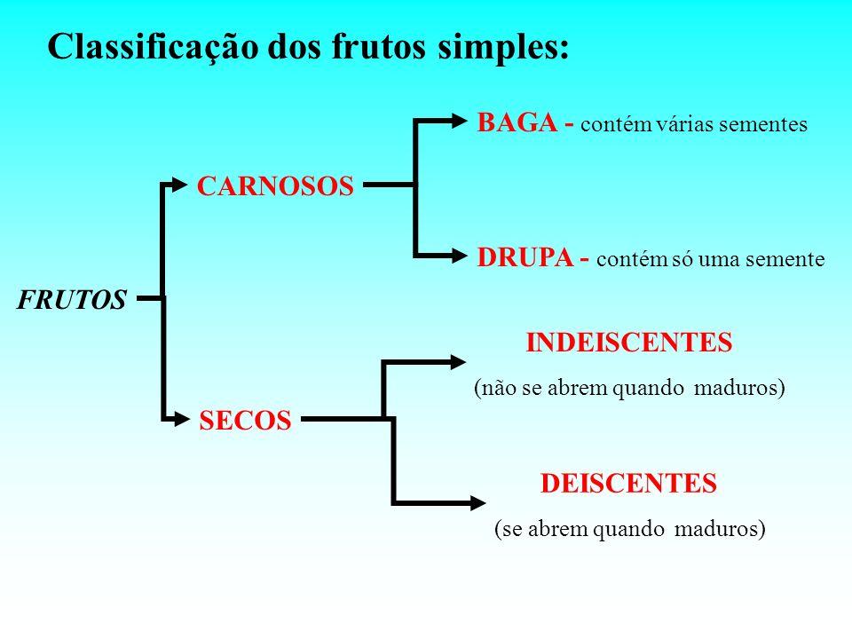 Classificação dos frutos simples: FRUTOS CARNOSOS BAGA - contém várias sementes DRUPA - contém só uma semente SECOS INDEISCENTES (não se abrem quando