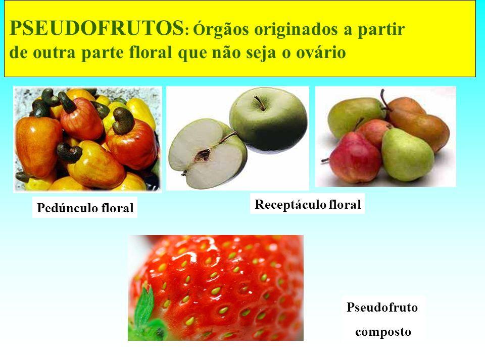 PSEUDOFRUTOS : Ó rgãos originados a partir de outra parte floral que não seja o ovário Pedúnculo floral Receptáculo floral Pseudofruto composto