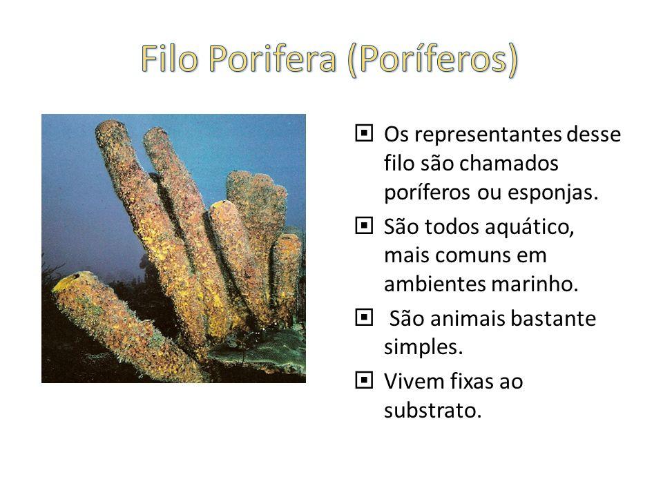 Os representantes desse filo são chamados poríferos ou esponjas. São todos aquático, mais comuns em ambientes marinho. São animais bastante simples. V