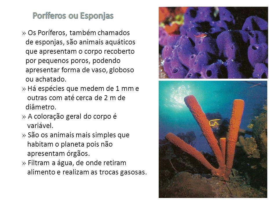 » Os Poríferos, também chamados de esponjas, são animais aquáticos que apresentam o corpo recoberto por pequenos poros, podendo apresentar forma de va