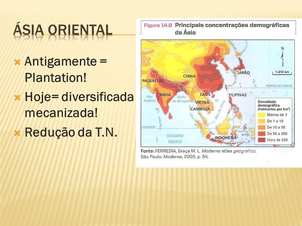 Antigamente = Plantation! Hoje= diversificada e mecanizada! Redução da T.N.