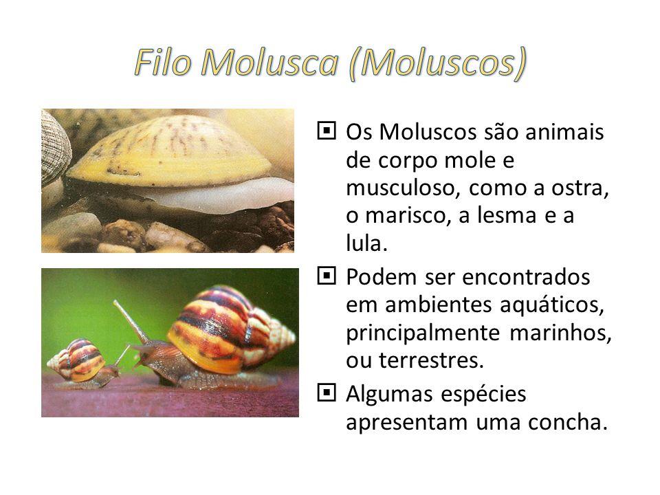 Os Moluscos são animais de corpo mole e musculoso, como a ostra, o marisco, a lesma e a lula. Podem ser encontrados em ambientes aquáticos, principalm
