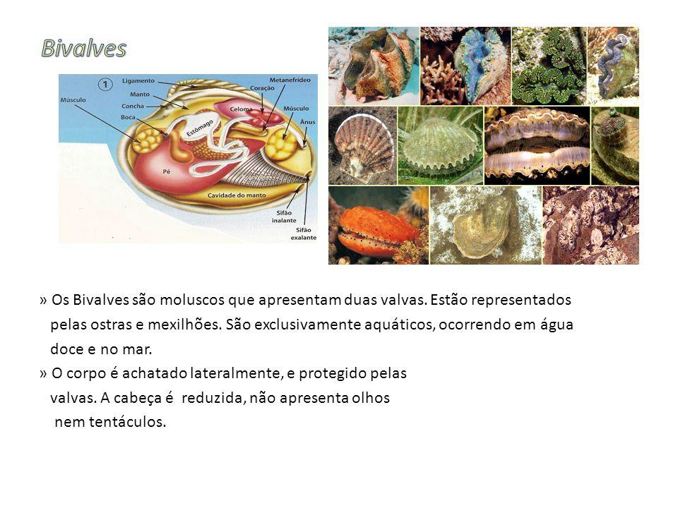 » Os Bivalves são moluscos que apresentam duas valvas. Estão representados pelas ostras e mexilhões. São exclusivamente aquáticos, ocorrendo em água d