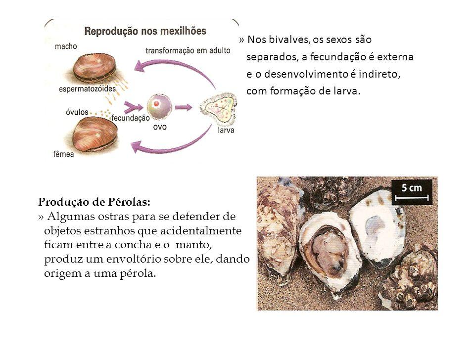 » Nos bivalves, os sexos são separados, a fecundação é externa e o desenvolvimento é indireto, com formação de larva. Produção de Pérolas: » Algumas o