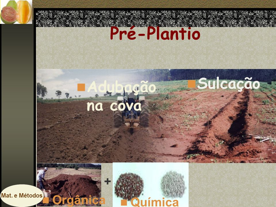 Pré-Plantio Sulcação Adubação na cova + Orgânica Química Mat. e Métodos