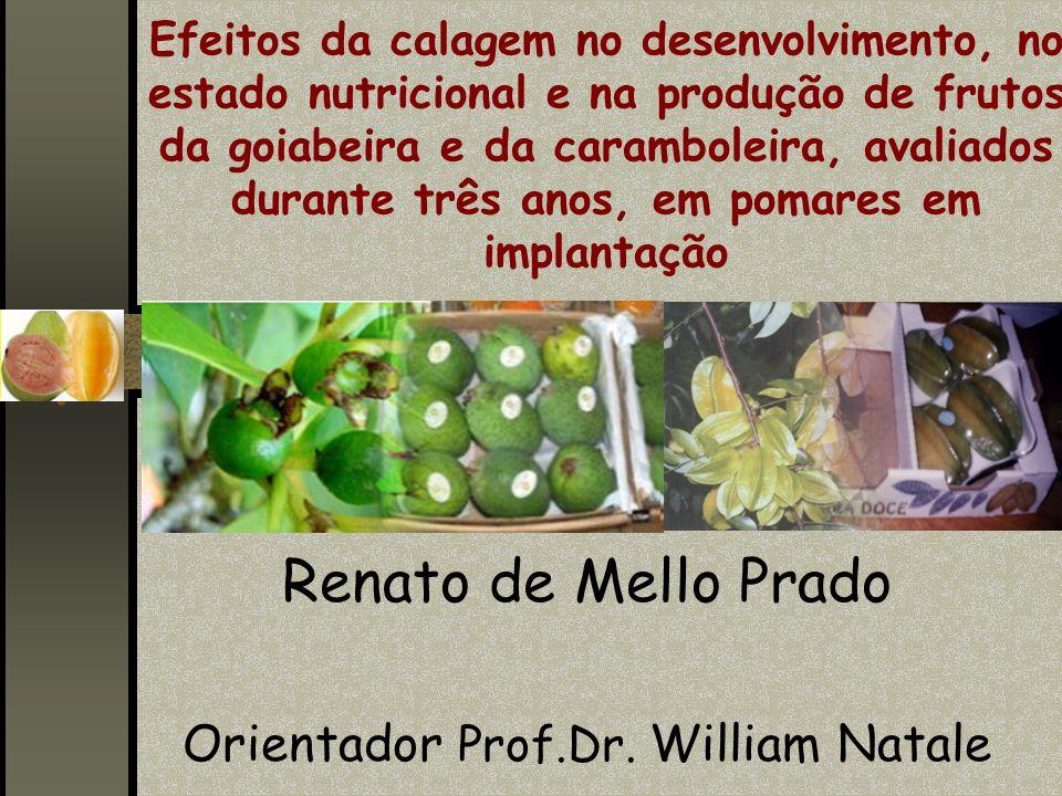 Efeitos da calagem no desenvolvimento, no estado nutricional e na produção de frutos da goiabeira e da caramboleira, avaliados durante três anos, em p