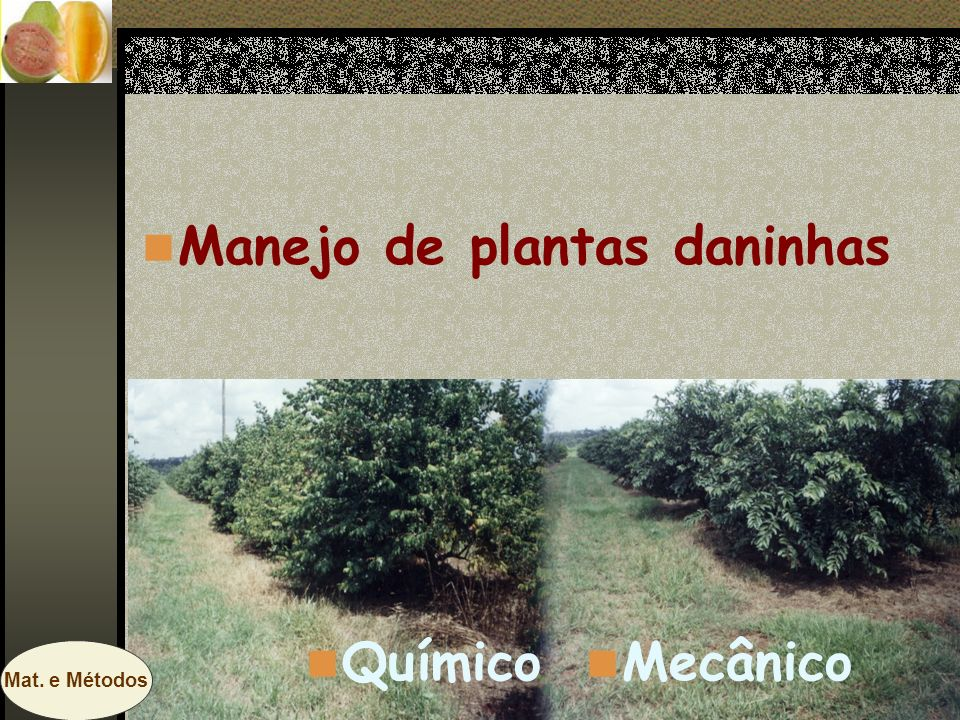 Manejo de plantas daninhas Mecânico Químico Mat. e Métodos