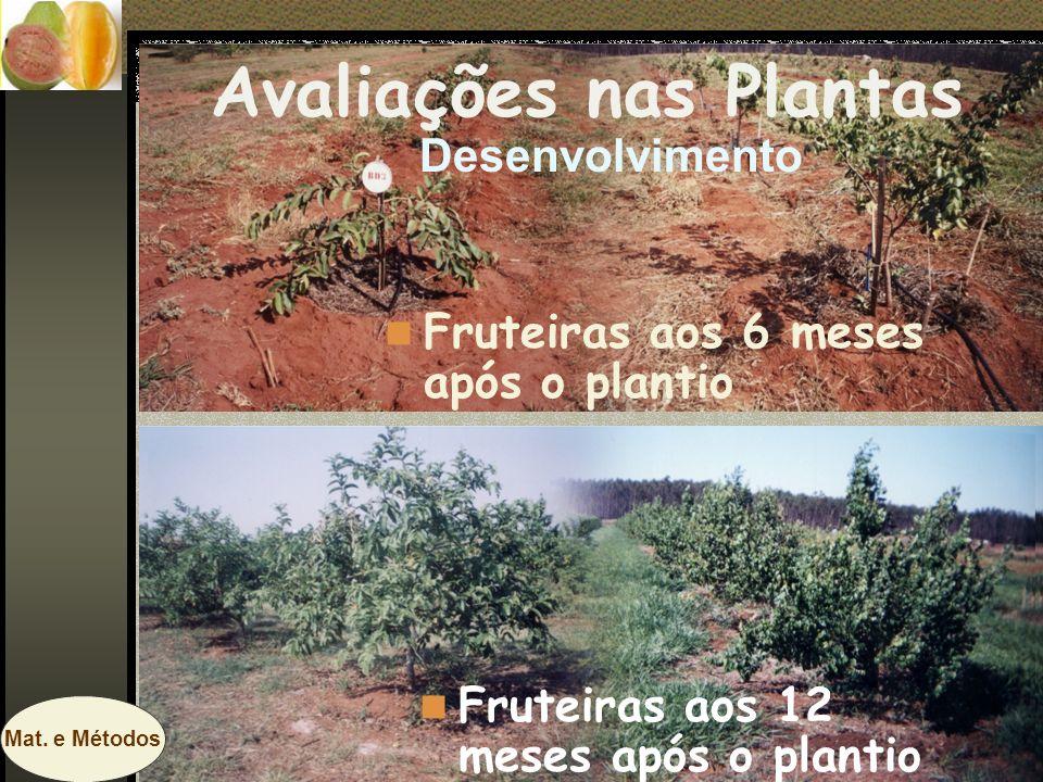Fruteiras aos 6 meses após o plantio Fruteiras aos 12 meses após o plantio Avaliações nas Plantas Desenvolvimento Mat. e Métodos