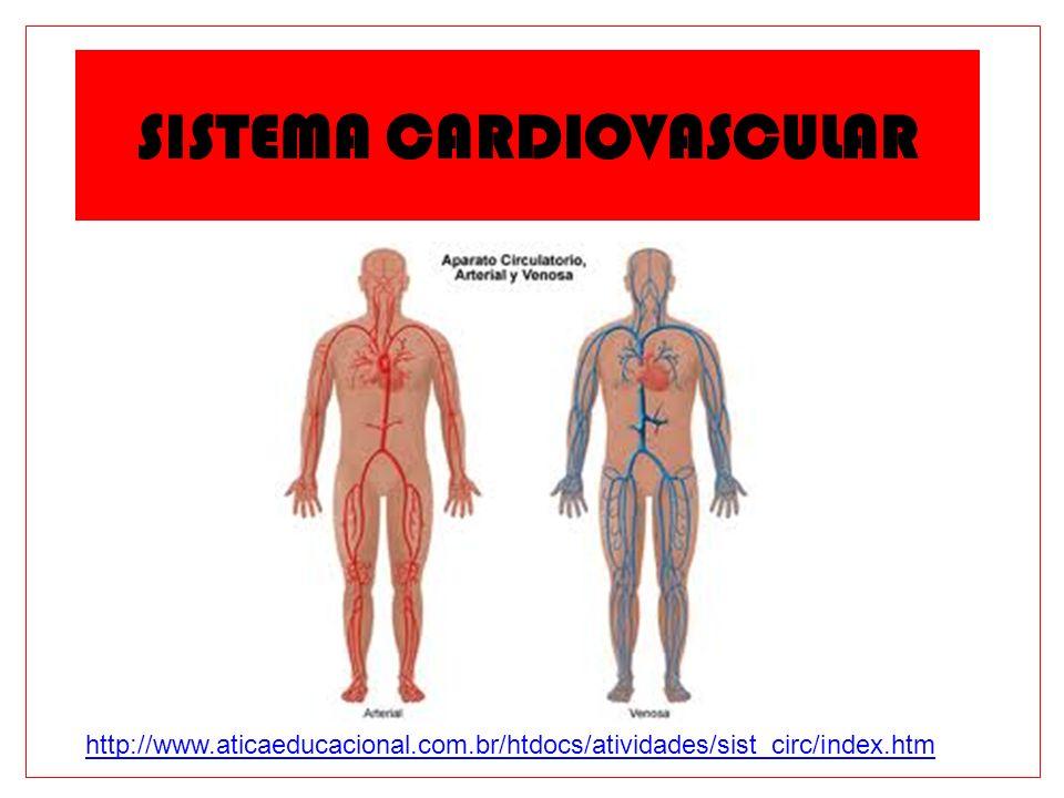O Sistema Cardiovascular Função: Distribuir nutrientes e oxigênio para todo o corpo.