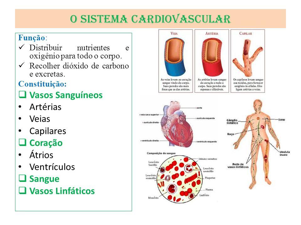 O Sistema Cardiovascular Função: Distribuir nutrientes e oxigênio para todo o corpo. Recolher dióxido de carbono e excretas. Constituição: Vasos Sangu