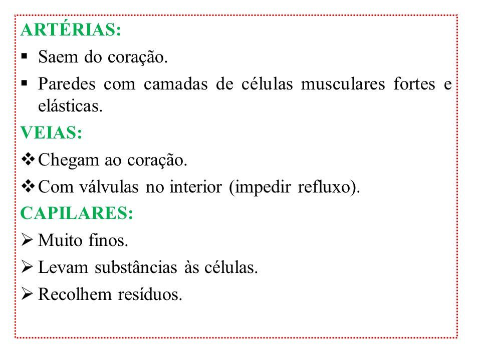 CIRCULAÇÃO LINFÁTICA Sistema linfático: linfa, vasos linfáticos, linfonodos (gânglios linfáticos), baço, timo e tonsilas palatinas (amígdalas).