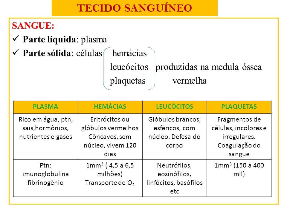 TECIDO SANGUÍNEO SANGUE: Parte líquida: plasma Parte sólida: células hemácias leucócitos produzidas na medula óssea plaquetas vermelha PLASMAHEMÁCIASL