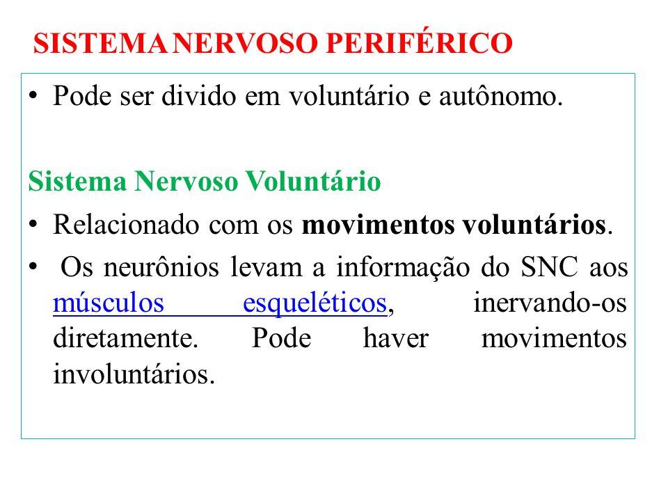 Pode ser divido em voluntário e autônomo. Sistema Nervoso Voluntário Relacionado com os movimentos voluntários. Os neurônios levam a informação do SNC