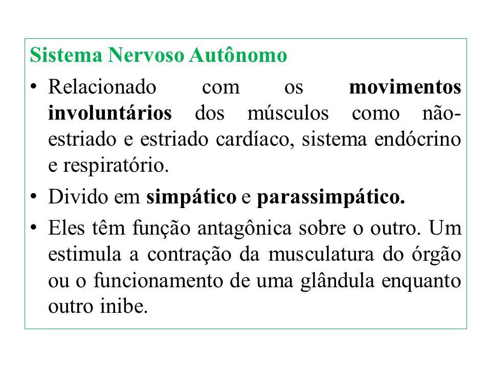Sistema Nervoso Autônomo Relacionado com os movimentos involuntários dos músculos como não- estriado e estriado cardíaco, sistema endócrino e respirat