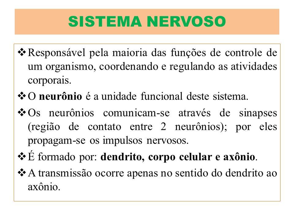 Responsável pela maioria das funções de controle de um organismo, coordenando e regulando as atividades corporais. O neurônio é a unidade funcional de