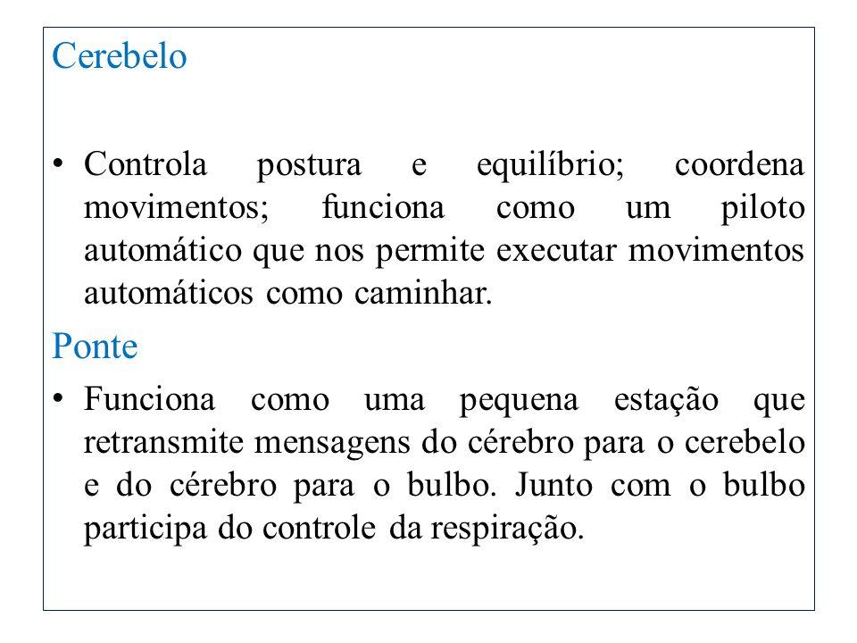 Cerebelo Controla postura e equilíbrio; coordena movimentos; funciona como um piloto automático que nos permite executar movimentos automáticos como c