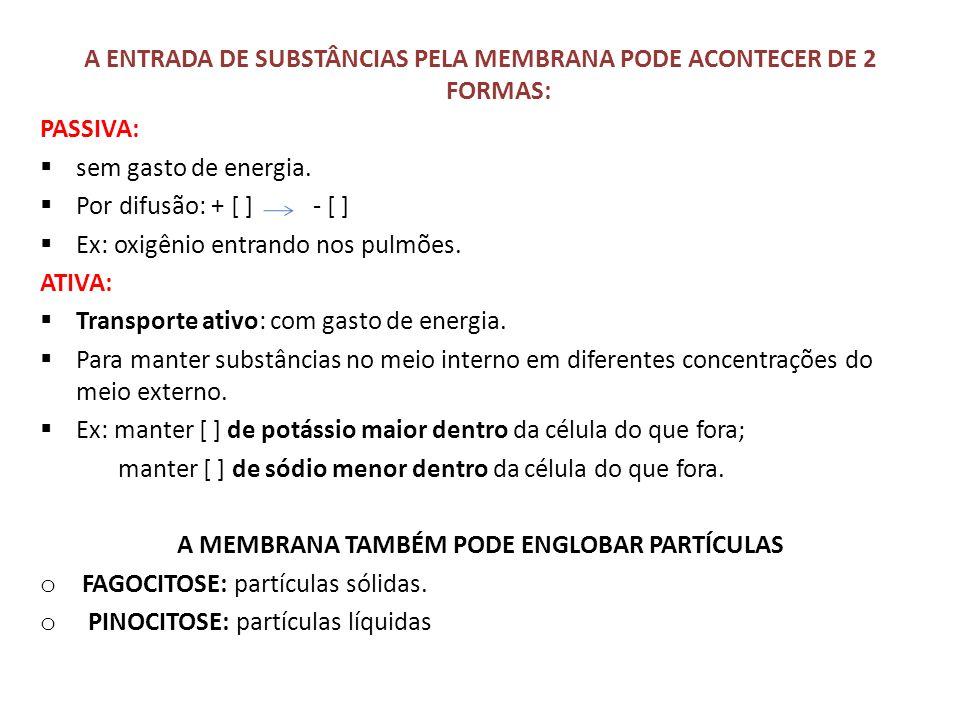 A ENTRADA DE SUBSTÂNCIAS PELA MEMBRANA PODE ACONTECER DE 2 FORMAS: PASSIVA: sem gasto de energia. Por difusão: + [ ] - [ ] Ex: oxigênio entrando nos p