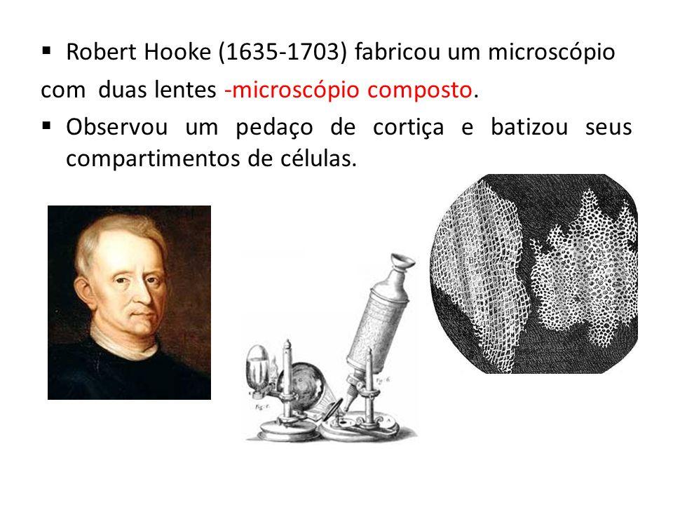 Robert Hooke (1635-1703) fabricou um microscópio com duas lentes -microscópio composto. Observou um pedaço de cortiça e batizou seus compartimentos de
