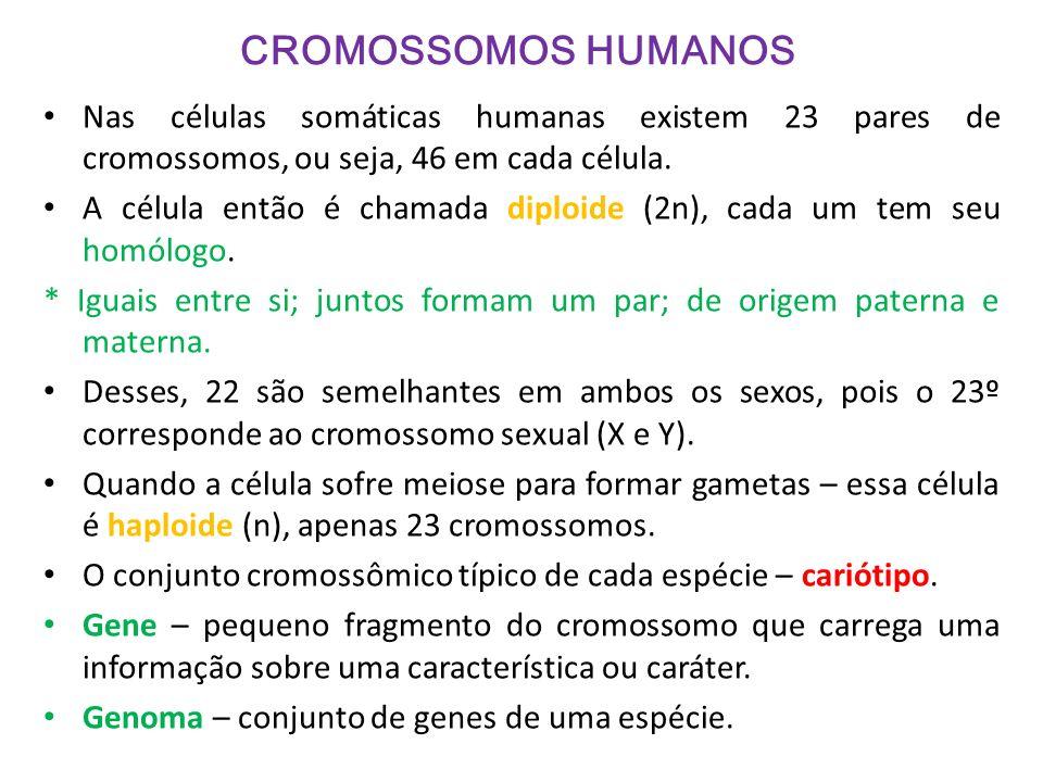 CROMOSSOMOS HUMANOS Nas células somáticas humanas existem 23 pares de cromossomos, ou seja, 46 em cada célula. A célula então é chamada diploide (2n),