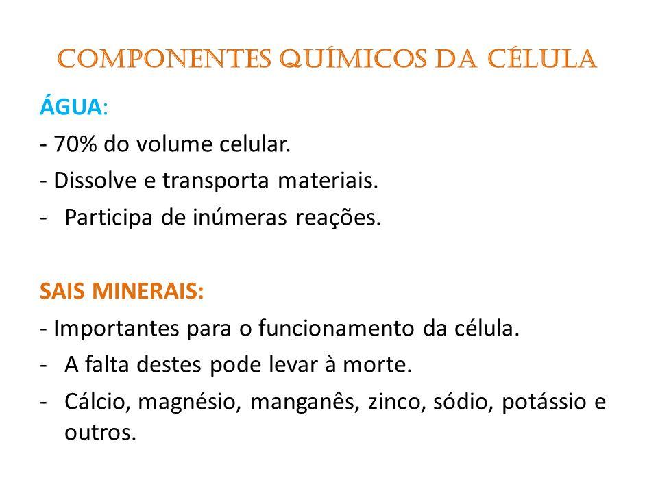 MITOCÔNDRIAS: Pequenos bastonetes membranosos.Produzem energia.