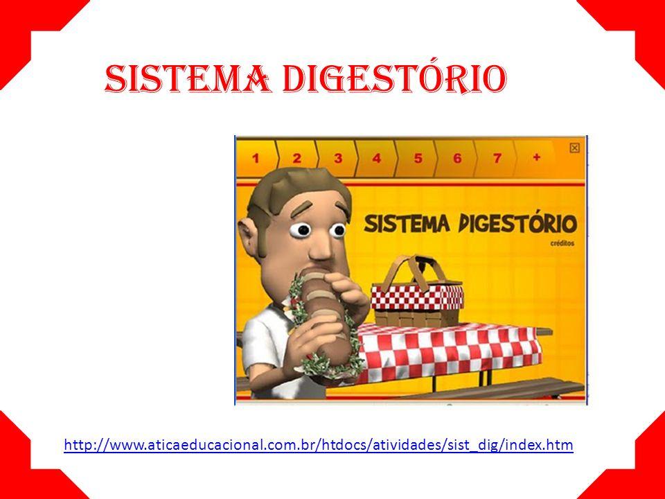 O sistema digestório compreende um longo tubo responsável pela digestão.