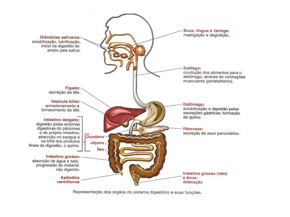 BOCA Dentes Mastigação e insalivação.Enzima: Ptialina ou amilase salivar (amido maltose).