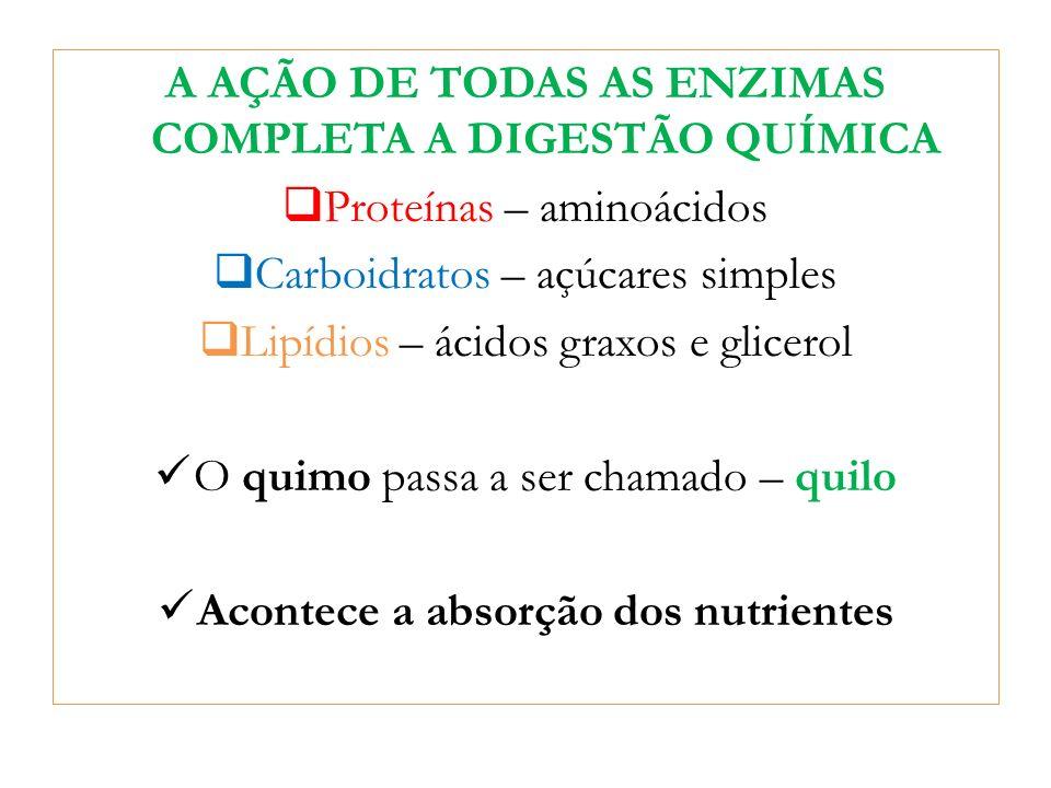 A AÇÃO DE TODAS AS ENZIMAS COMPLETA A DIGESTÃO QUÍMICA Proteínas – aminoácidos Carboidratos – açúcares simples Lipídios – ácidos graxos e glicerol O q