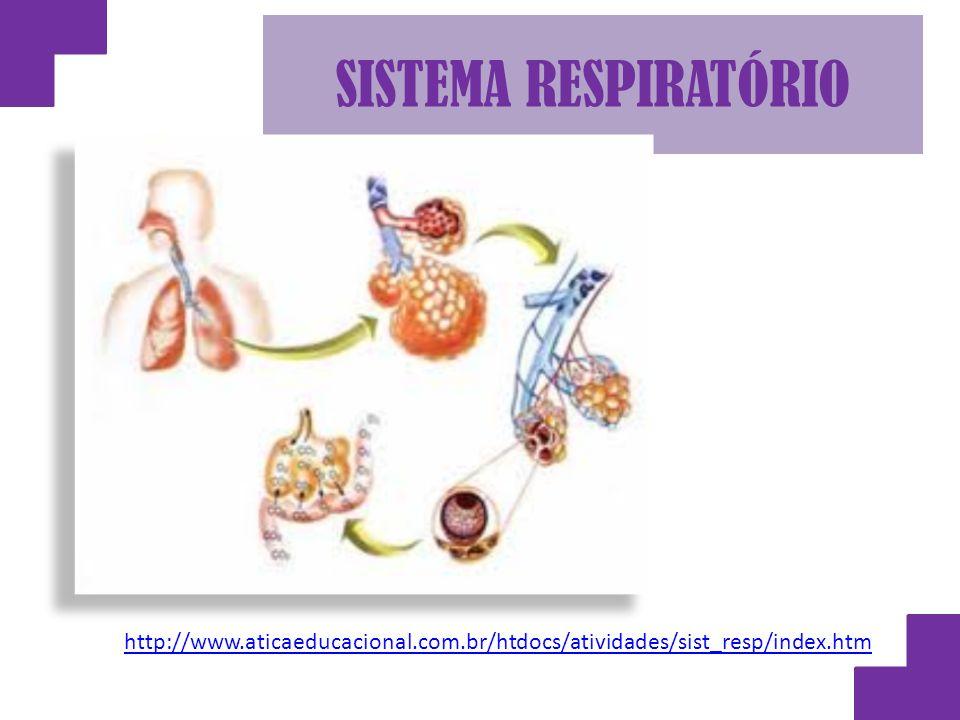 SISTEMA RESPIRATÓRIO http://www.aticaeducacional.com.br/htdocs/atividades/sist_resp/index.htm