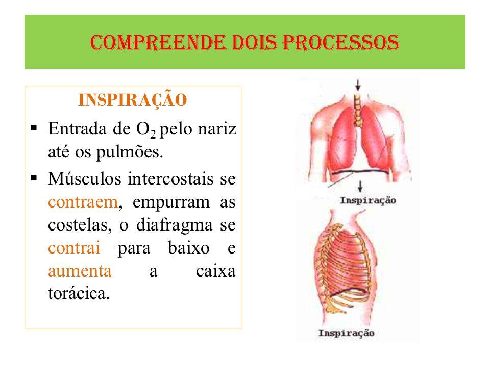 Compreende dois processos INSPIRAÇÃO Entrada de O 2 pelo nariz até os pulmões. Músculos intercostais se contraem, empurram as costelas, o diafragma se