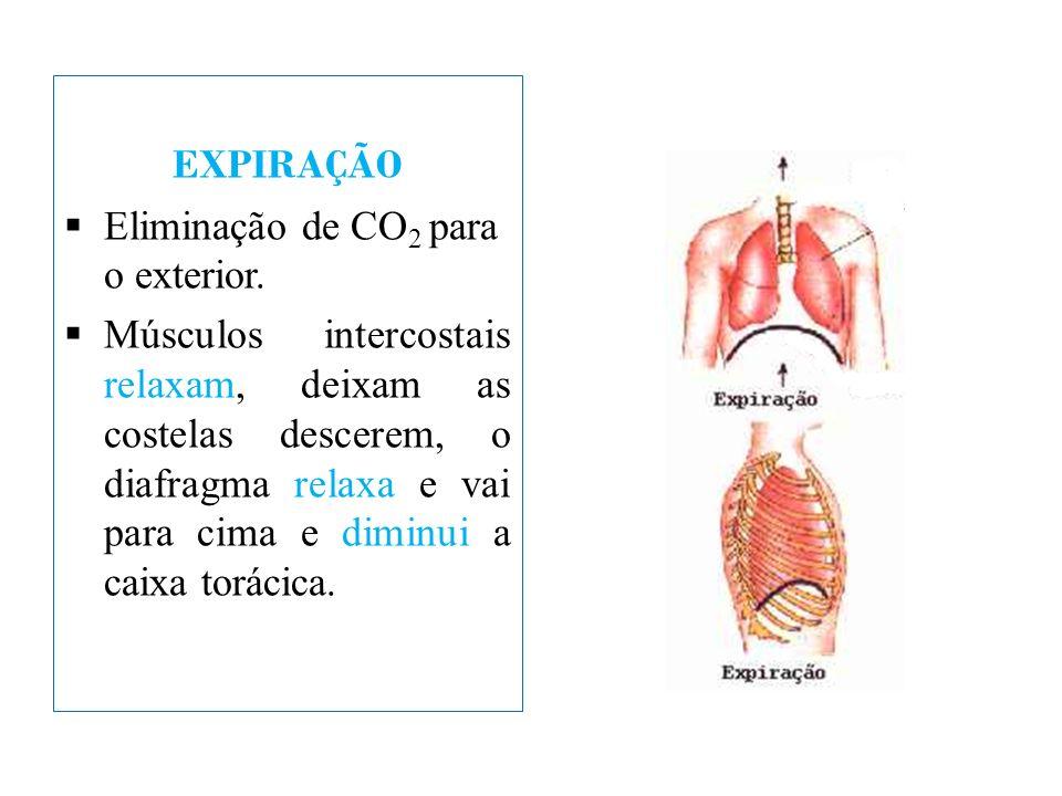 EXPIRAÇÃO Eliminação de CO 2 para o exterior. Músculos intercostais relaxam, deixam as costelas descerem, o diafragma relaxa e vai para cima e diminui