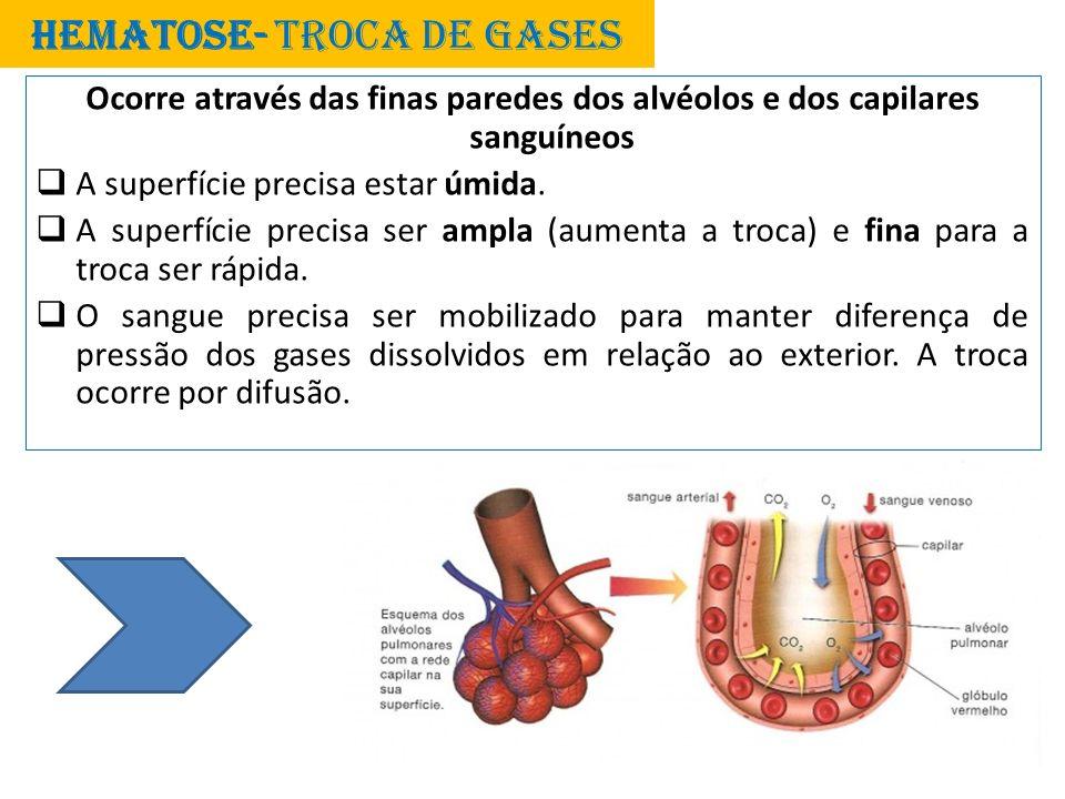 HEMATOSE- TROCA DE GASES Ocorre através das finas paredes dos alvéolos e dos capilares sanguíneos A superfície precisa estar úmida. A superfície preci