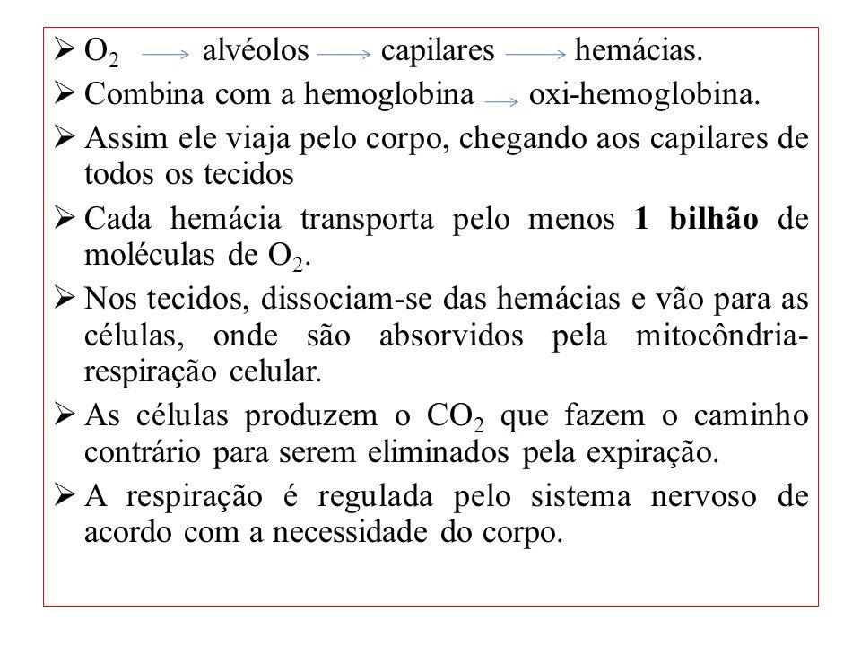 O 2 alvéolos capilares hemácias. Combina com a hemoglobina oxi-hemoglobina. Assim ele viaja pelo corpo, chegando aos capilares de todos os tecidos Cad
