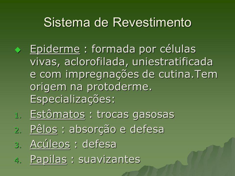 Sistema de Revestimento Epiderme : formada por células vivas, aclorofilada, uniestratificada e com impregnações de cutina.Tem origem na protoderme. Es
