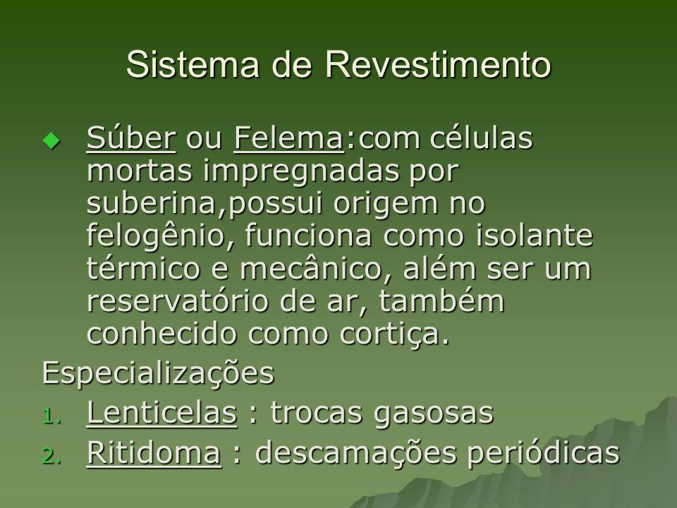 Sistema de Revestimento Súber ou Felema:com células mortas impregnadas por suberina,possui origem no felogênio, funciona como isolante térmico e mecân