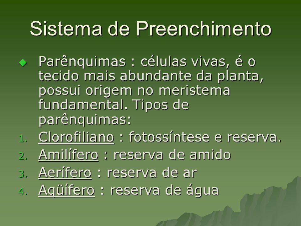 Sistema de Preenchimento Parênquimas : células vivas, é o tecido mais abundante da planta, possui origem no meristema fundamental. Tipos de parênquima