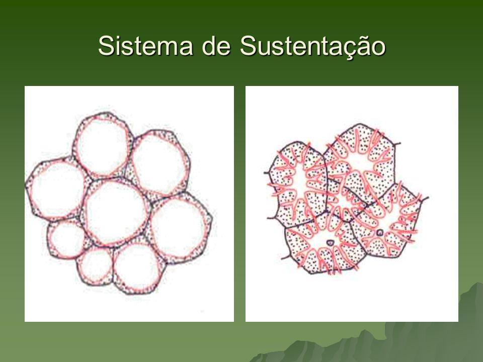 Sistema de Sustentação