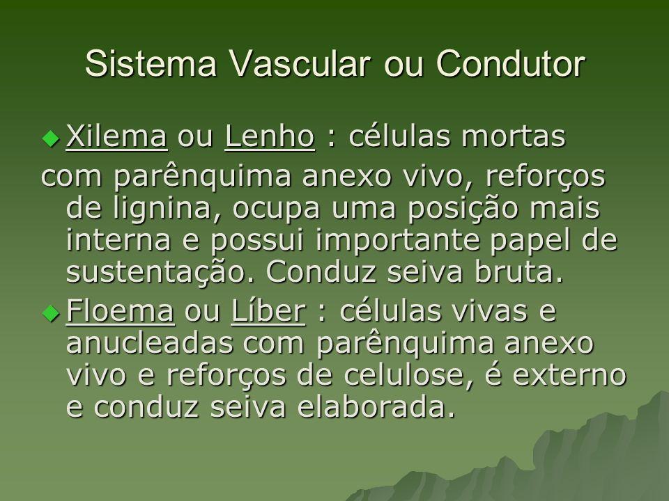 Sistema Vascular ou Condutor Xilema ou Lenho : células mortas Xilema ou Lenho : células mortas com parênquima anexo vivo, reforços de lignina, ocupa u