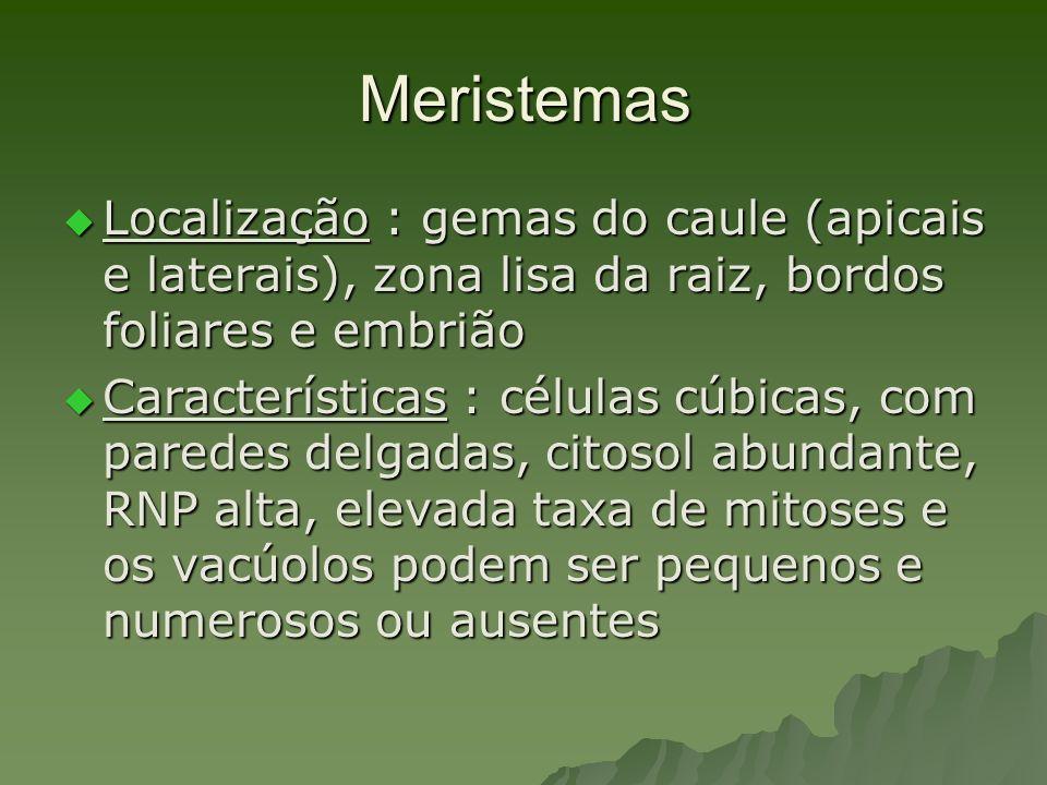 Meristemas Localização : gemas do caule (apicais e laterais), zona lisa da raiz, bordos foliares e embrião Localização : gemas do caule (apicais e lat