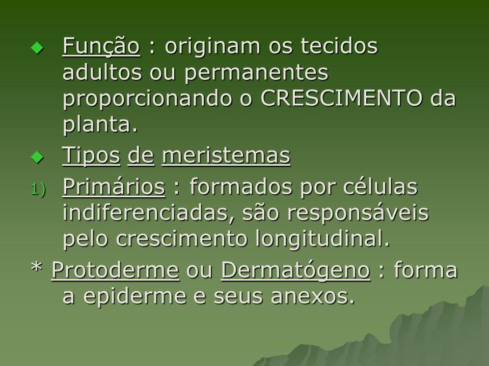 Função : originam os tecidos adultos ou permanentes proporcionando o CRESCIMENTO da planta. Função : originam os tecidos adultos ou permanentes propor