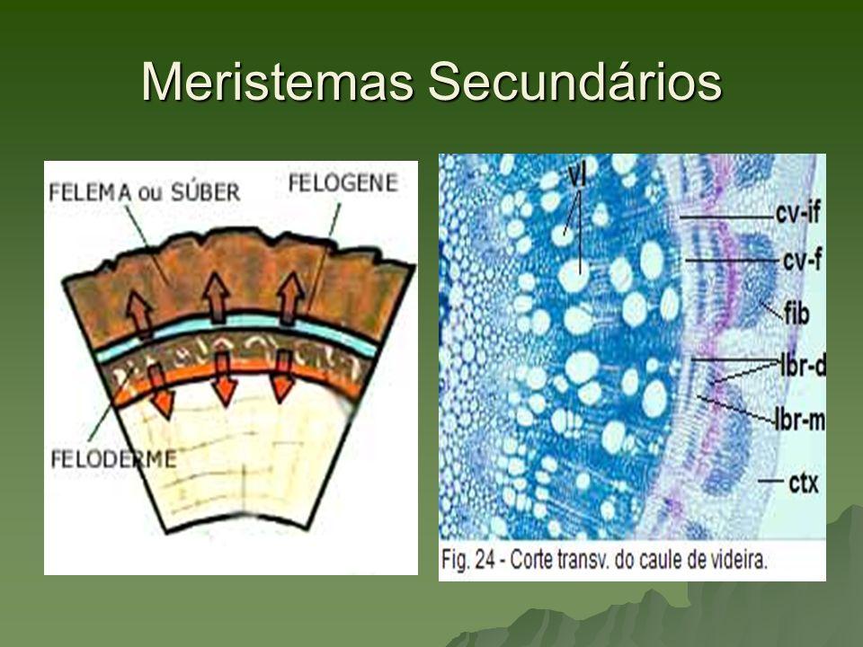 Tecidos Adultos ou Permanentes Sistema de Revestimento Sistema de Revestimento Sistema de Preenchimento Sistema de Preenchimento Sistema de Sustentação Sistema de Sustentação Sistema Vascular Sistema Vascular Sistema Secretor Sistema Secretor